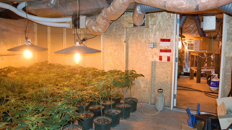 Niagara police discovered an entire basement of a home had been sub-divided into six separate rooms that were dedicated to the production of marijuana, pictured here in Niagara Falls, Ont., May 4, 2011. (HO - Niagara Regional Police Service / THE CANADIAN PRESS)