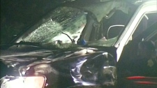 Two people were killed when their vehicle struck a bear on Highway 148 near Luskville, Que., Monday. June 6, 2011. The impact of the crash caused the animal to go through the windshield and out the back window. Courtesy: TVA