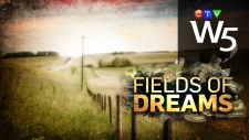 W5: Fields of Dreams