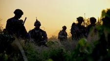 American and Canadian soldiers pick their way through a grapefield at sunrise on Thursday June 2, 2011, for a joint patrol, in Zangabad, Afghanistan. (THE CANADIAN PRESS/ Murray Brewster)