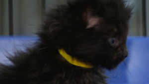 CTV Winnipeg: Shelter caring for abandoned kittens
