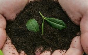 Soil generic