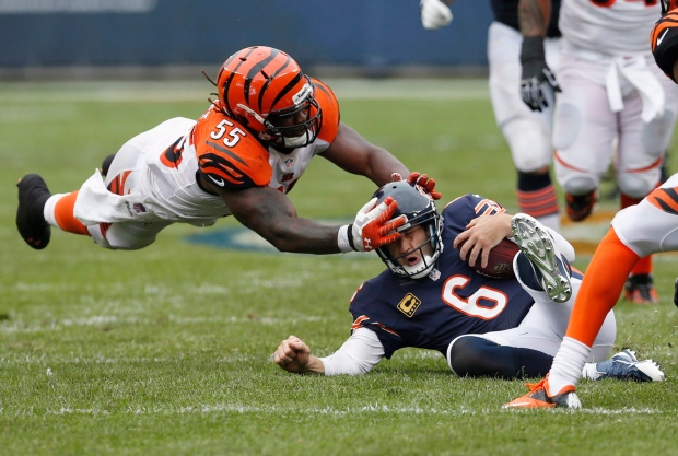 Burfict Bengals Bengals Linebacker Burfict