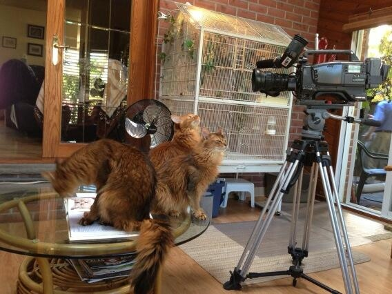 Cats check out CTV equipment at the home of Ken McGill in London, Ont. on Wednesday, Oct. 2, 2013. (Cara Campbell / CTV London)