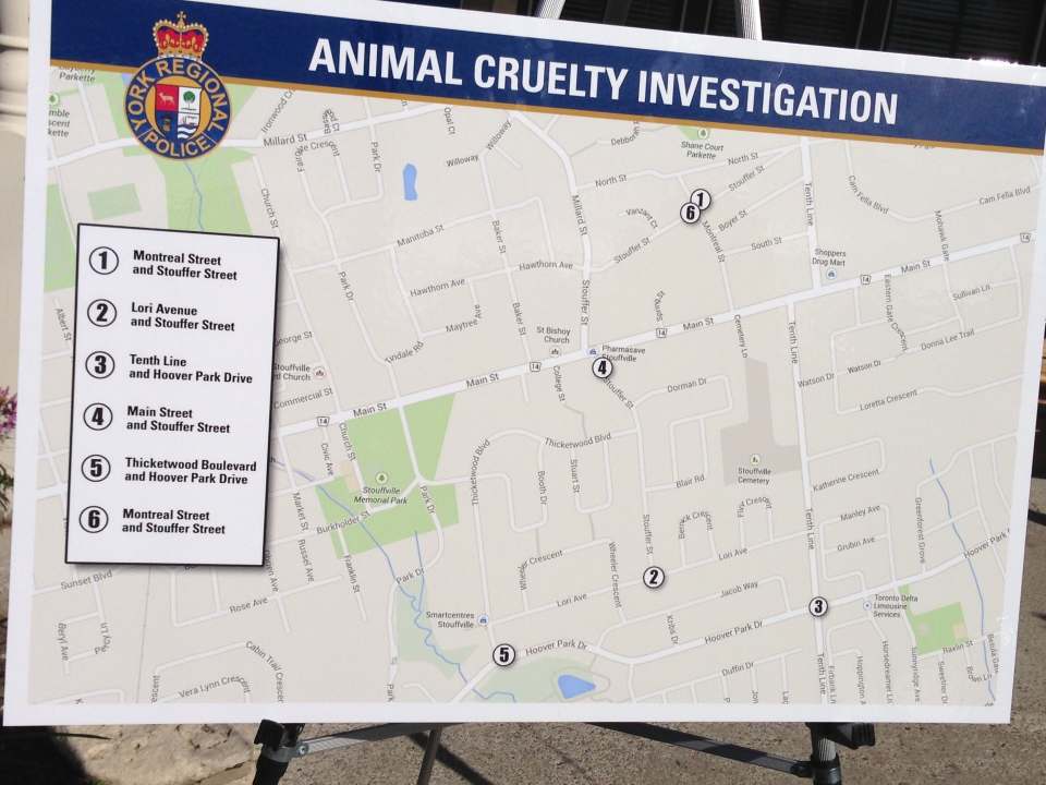 York Regional police are investigating after the severed heads of six cats were recently found in the municipality of Whitchurch-Stouffville, Ont. (Tamara Cherry / CTV Toronto)
