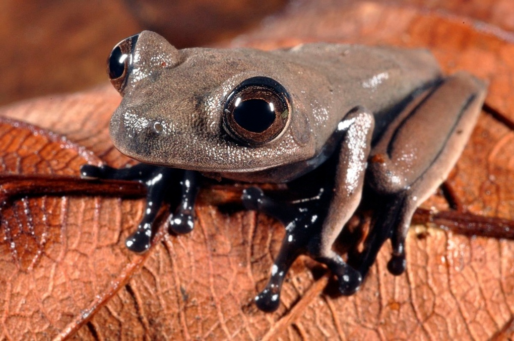 New species Suriname
