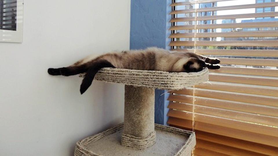 Kelli Seepaul's cat Willow went missing at Vancouver International Airport.
