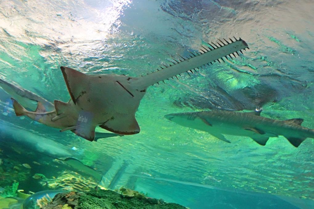 Sneak peek into Ripley's Aquarium of Canada | CTV Toronto News