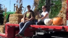A pair sits on the back of a tractor with hay and pumpkins.