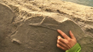 CTV National News: Unearthing Alberta's past