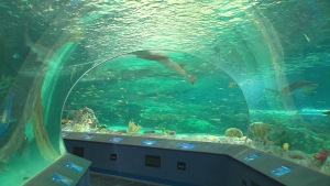 A look inside Ripley's Aquarium in Toronto on opening day, October 16, 2013.
