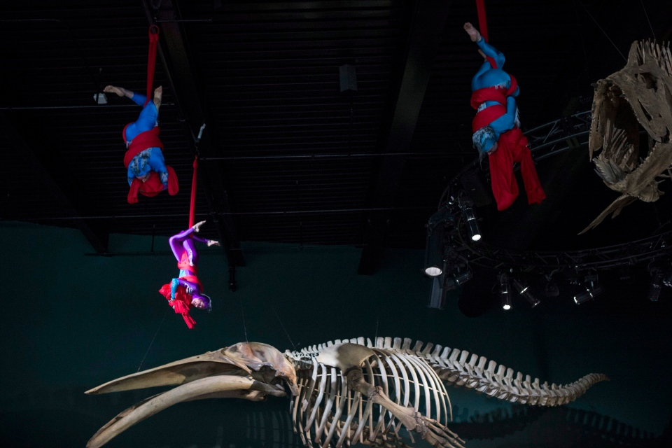 Acrobats perform a ribbon cutting ceremony at the opening of the Ripley's Aquarium of Canada in Toronto on Wednesday, Oct. 16, 2013. (Chris Young / THE CANADIAN PRESS)