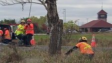 Transitway Tree cutting