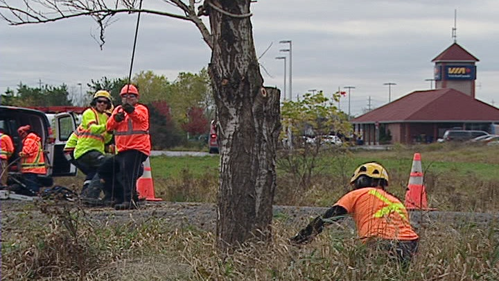 Crews cut down trees along the transitway near the site of the September 18 bus-train crash.