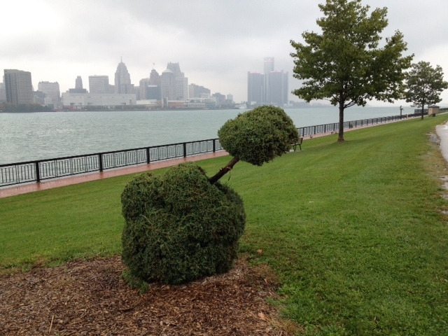 Windsor workers trimmed a phallic-shaped bush in Windsor, Ont., on Thursday, Oct. 17, 2013. (Christie Bezaire / CTV Windsor)