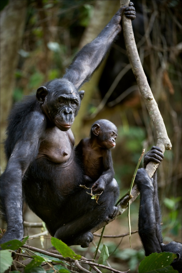 humans and primates Social structure most primates, including humans, spend their lives in large social groups or communities in the case of semi-terrestrial species, such as.