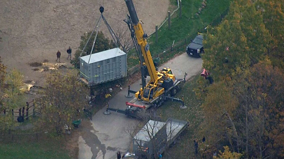Workers at the Toronto Zoo transport elephants for their departure to California, Thursday, Oct. 17, 2013.