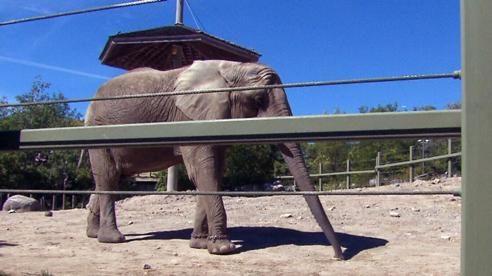 Toronto Zoo elephants arrive at their new home in California on Sunday, Oct. 20, 2013.