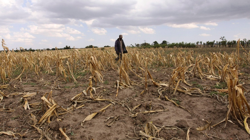 A man walks through a dead maize field due to the drought, near the Mau forest in Kenya, Oct. 5, 2009. (AP / Khalil Senosi)
