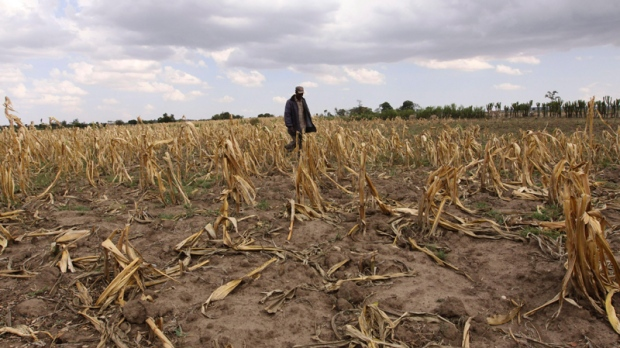 A man walks through a dead maize field due to the drought, near the Mau forest in Kenya, Oct. 5, 2009. (AP / Khalil Senosi)