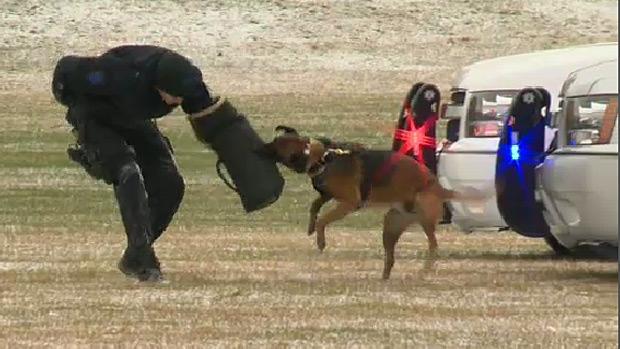 Quanto, police dog, october 2013