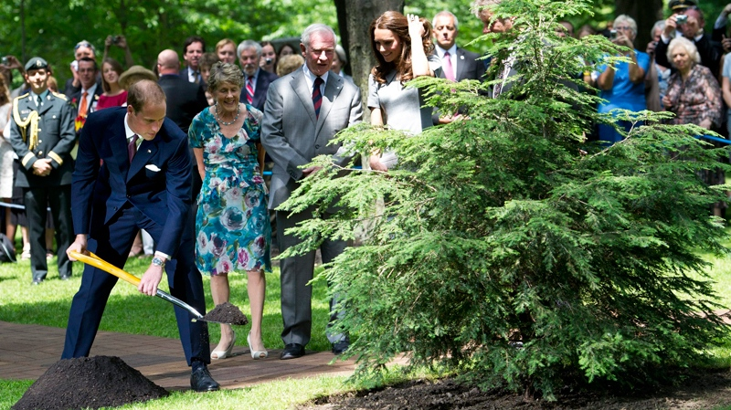 The Duke and Duchess of Cambridge take aprt in a ceremonial tree plating with Governor General David Johnston and his wife Sharon at Rideau Hall in Ottawa on Saturday, July 2, 2011. (Nathan Denette / THE CANADIAN PRESS)