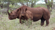 Auction for hunting permit for black rhino