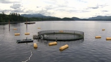 The AgriMarine fish farm near Campbell River is Canada's first closed-containment aquaculture project. July 6, 2011. (CTV)