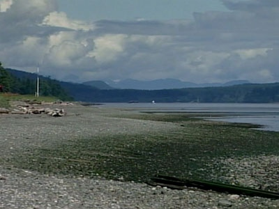 The sixth foot was found along a beach in Campbell River, B.C., on Wednesday, June 18, 2008.