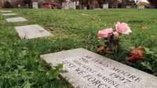Fairview Cemetery in Halifax