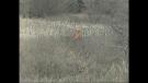 Deer hunting season is underway in Ontario.
