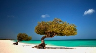 A beach in Aruba is shown in this photo provided by the Aruba Tourism Authority.