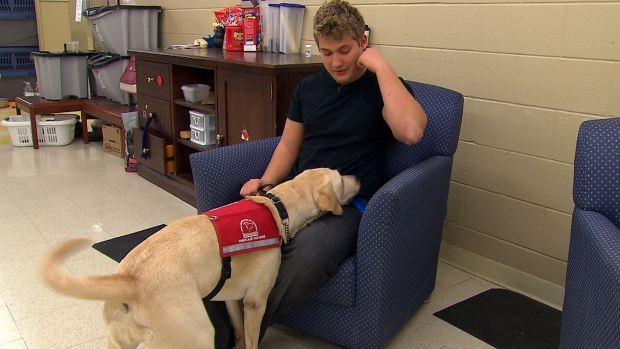 Program teaches dogs to detect high and low blood sugar in ...