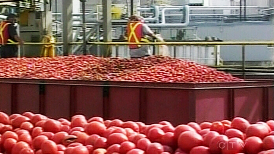 Employees work in the Heinz factory in Leamington, Ont. on Thursday, Nov. 14, 2013.