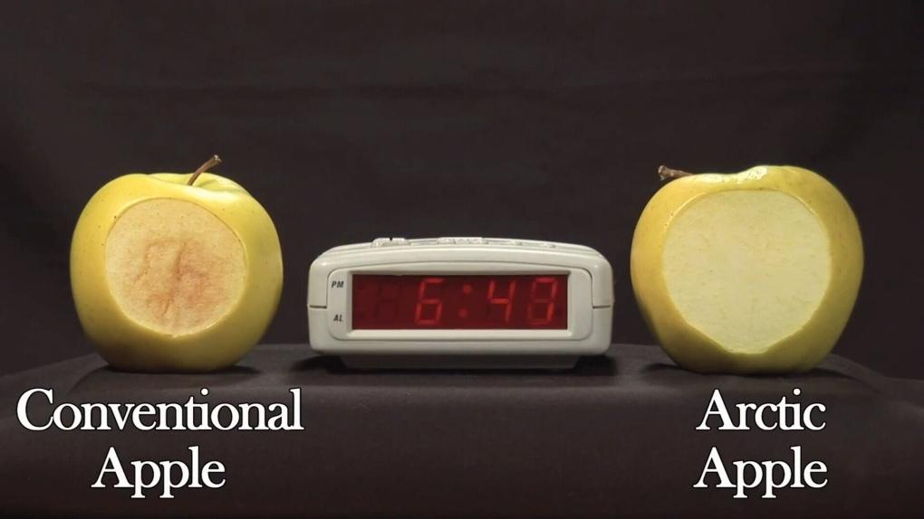 The Arctic Apple