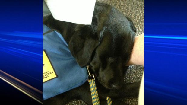 Hawk: CPS trauma dog