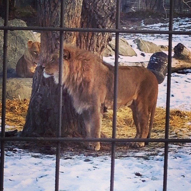 The Calgary Zoo re-opened five months after a flood devastated the facility, Thursday, Nov. 28, 2013. (Instagram / thecalgaryzoo)