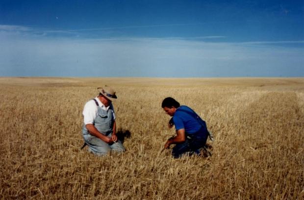Grain field in Saskatchewan
