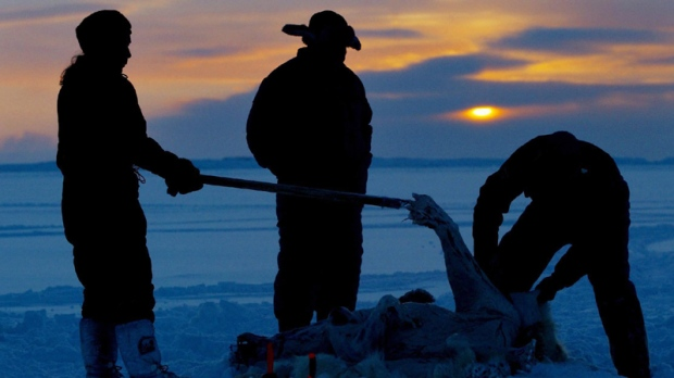 FILE - This is a Feb. 2, 2003 file photo of Inuit hunters skin a polar bear on the ice during the traditional hunt on Frobisher Bay near Tonglait, Nunavut. Global mercury emissions could grow by 25 percent by 2020, if no action is taken to control them, posing a threat to polar bears, whales and seals and the Arctic communities who hunt them for food, an authoritative international study says.
