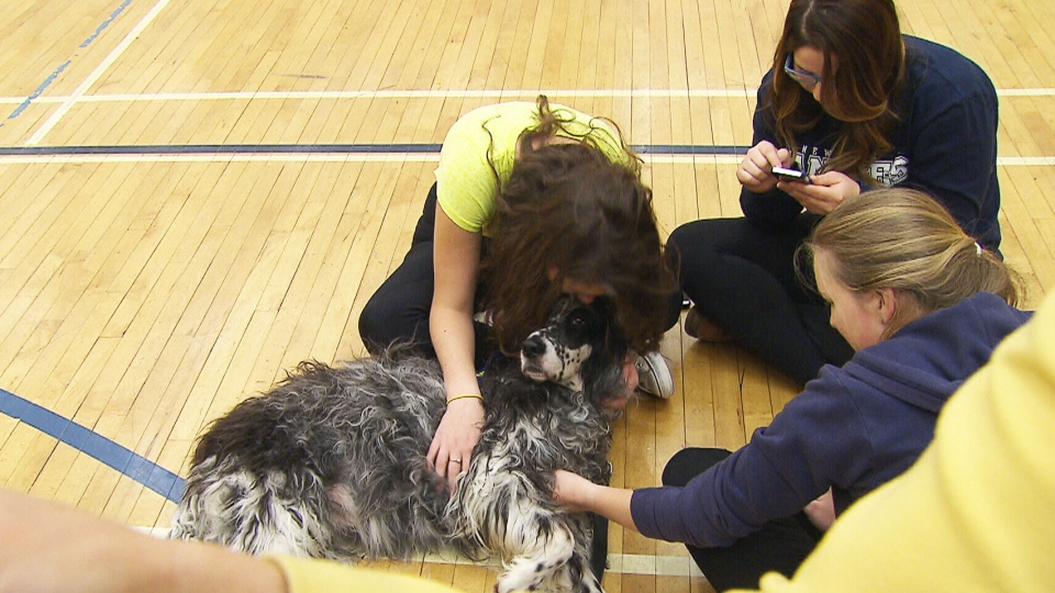 Ryerson students cuddle with a therapy dog as they try to relieve stress during exam time.