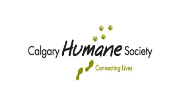 Local animal rescue group faces charges | CTV News