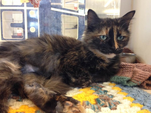 Christie is an adorable cat looking for a home. (CTV Windsor)