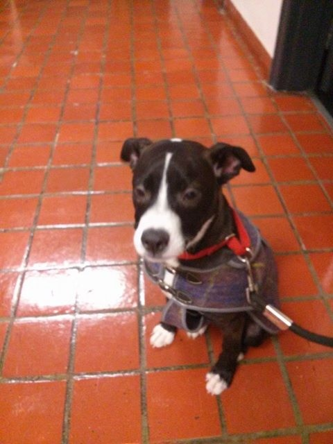Holly the dog is adorable and ready for a new home.