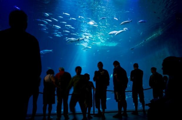 'Ozeanum' aquarium