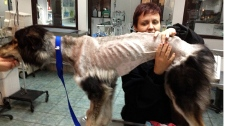 Molly emaciated dog
