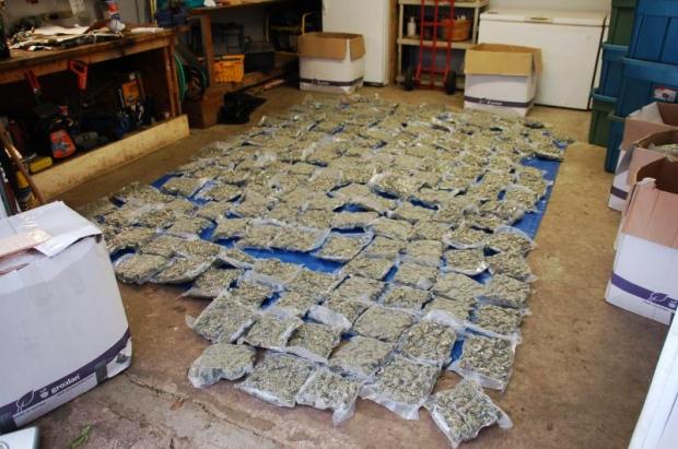 Seized marijuana