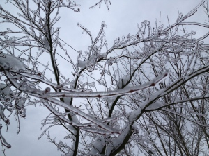Ice on tree branches