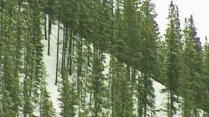 CTV News Channel: Deadly avalanche in B.C.