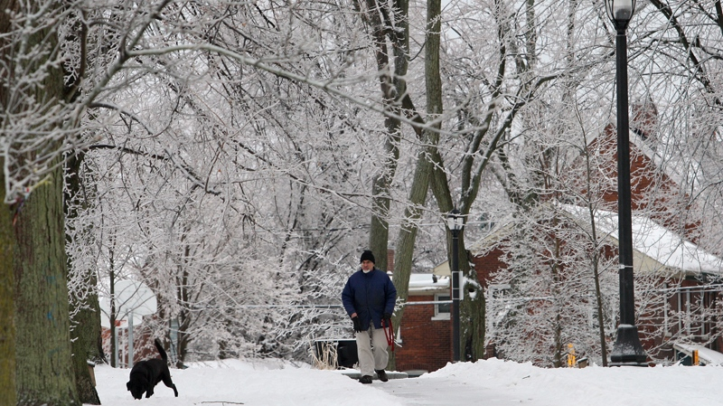 A man walks his dog in a park in Kingston, Ont., on Saturday December 21, 2013.  (Lars Hagberg / THE CANADIAN PRESS)