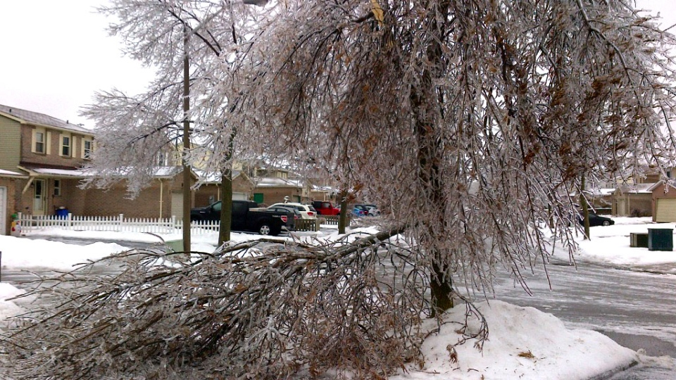A tree is left damaged during an ice storm in Ajax, Ont., Sunday, Dec. 22, 2013. (Kriston Mark)